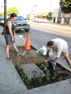 Pavement guerrilla gardening. Photo: Josef Bray-Ali