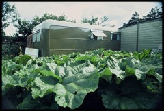 Cabbages and the Original Caravan. Photo: Findhorn Foundation