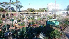 Veg-out community garden in St Kilda, Melbourne, founded in 1998. Photo: Tatjana Schneider